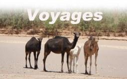 Voyages - Raids
